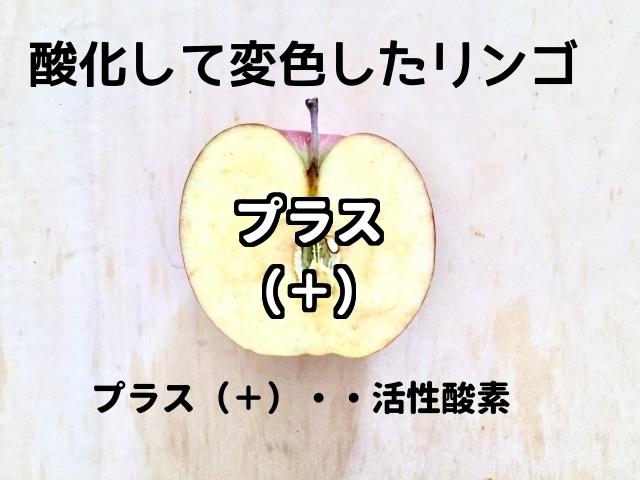 プラスの電力を持った活性酸素を帯びて変色したリンゴ